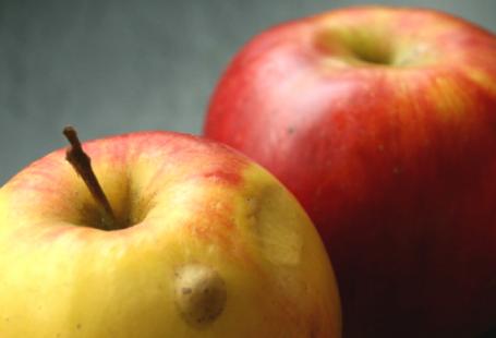 Apfelmus mit einer feinen Tonkanote