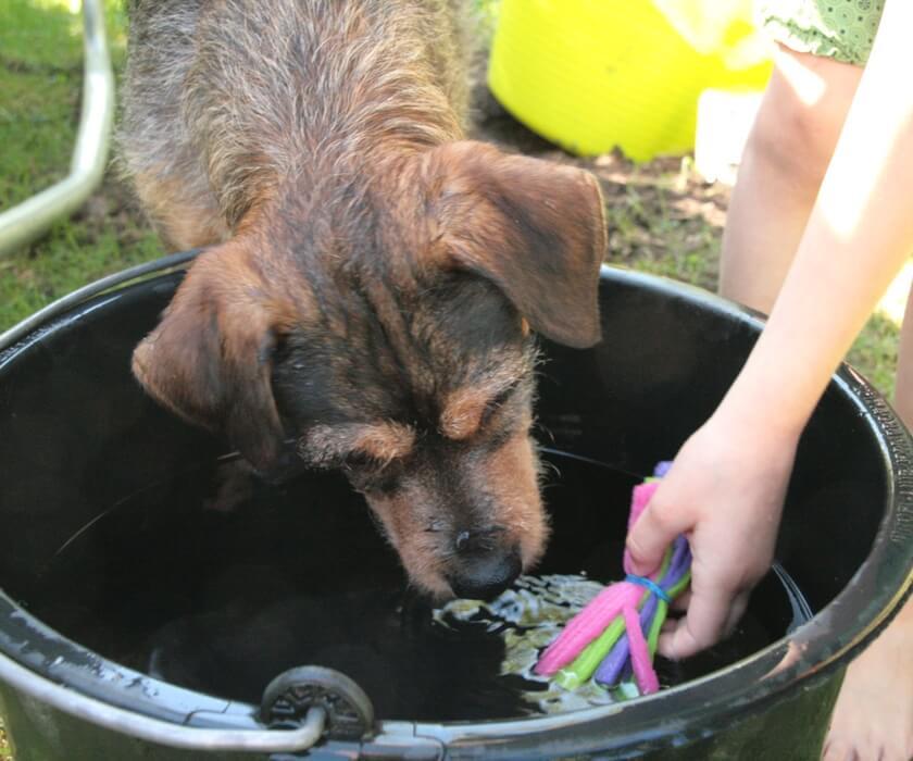 Hund und Wasserbombe