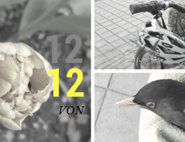 12 Bilder im April 2017