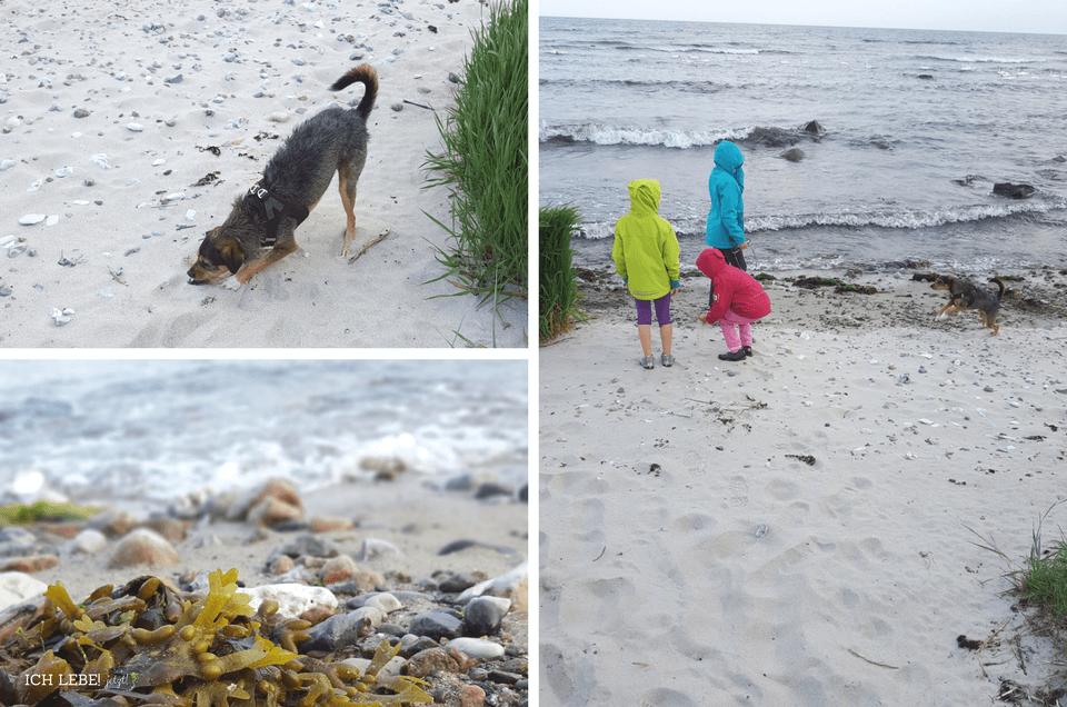 Kinder und Hund am Meer.