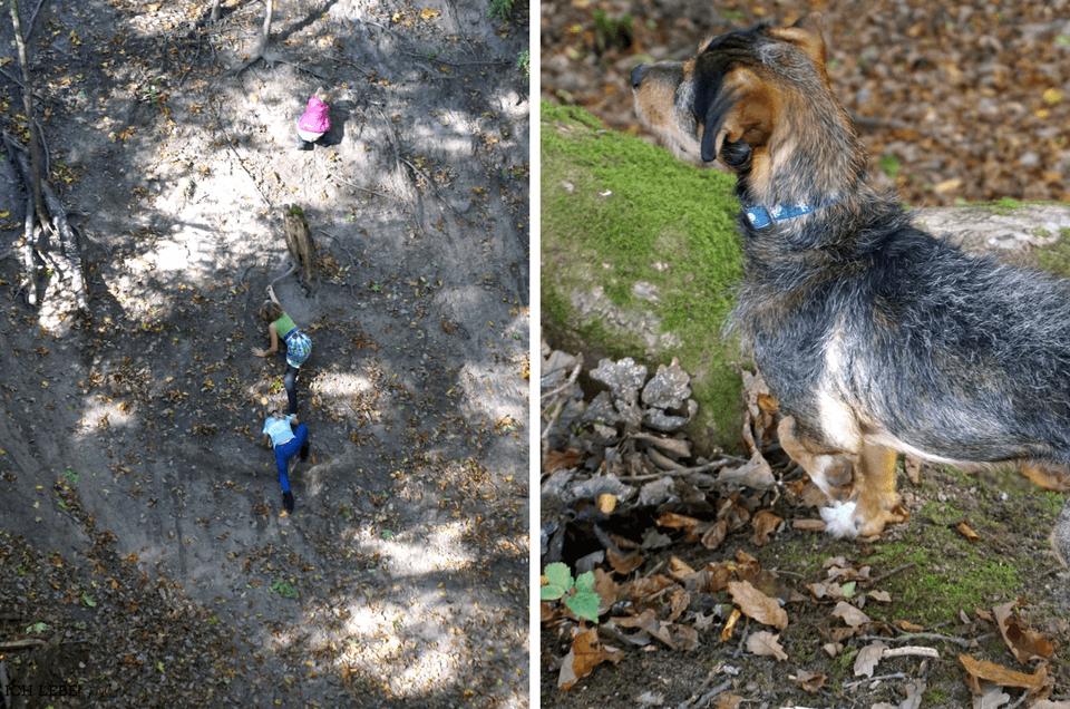links: Kletternde Kinder, rechts: aufmerksammer Hund