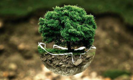 Wir haben nur eine Erde – Weltumwelttag