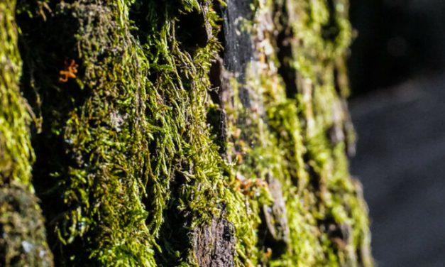 Mit Kindern in den Wald: Baumentdecker gesucht!