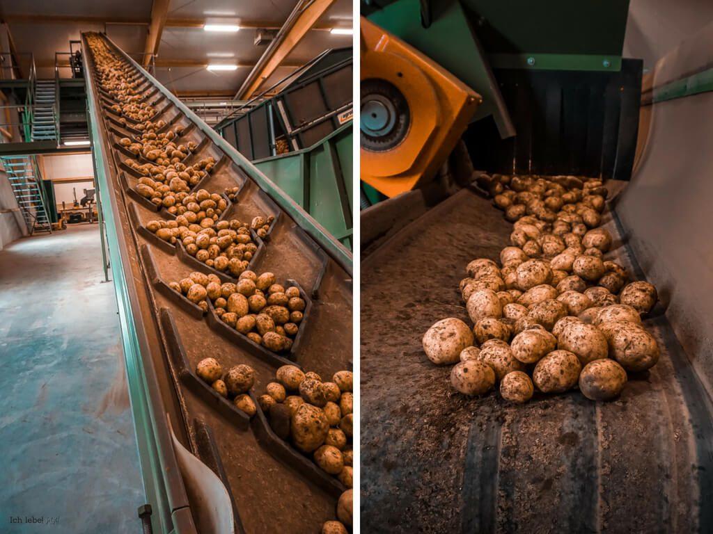 Bioerlebnistage 2018 Hatzlhof Kartoffeln sortieren