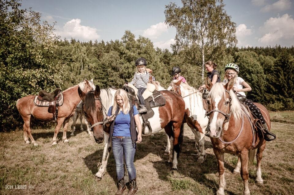 Pferde am Strick