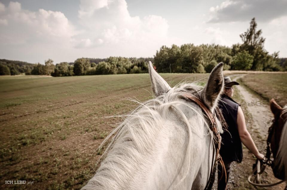 Ausblick zu Pferd.