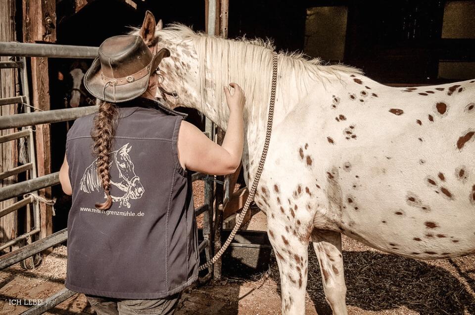Andrea Steinkohl sattelt die Pferde