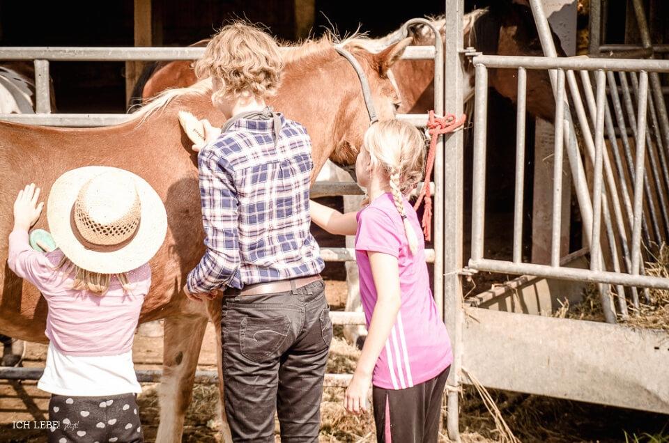 Kinder putzen Pferde vor dem Ausritt