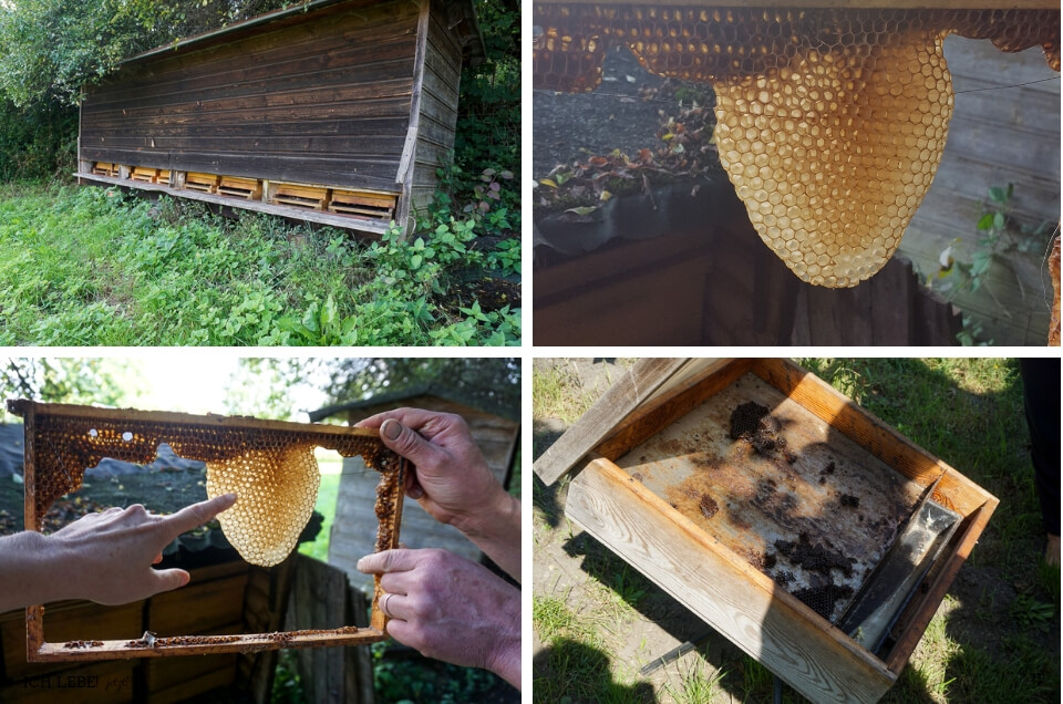 Bienenkästen, Waben und Sonnenwachsschmelzer