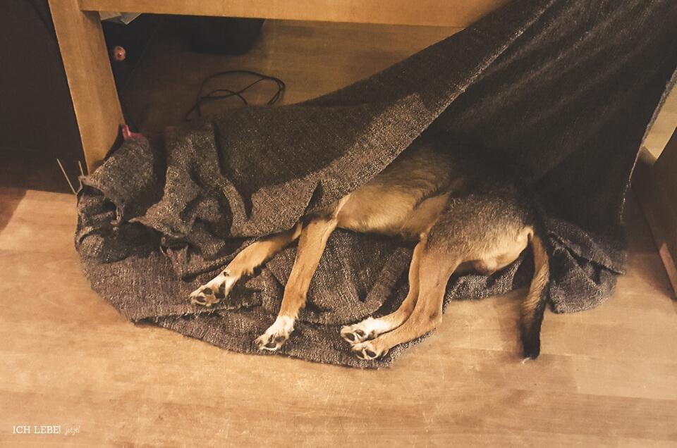 Charly mit Kopf unter der Decke