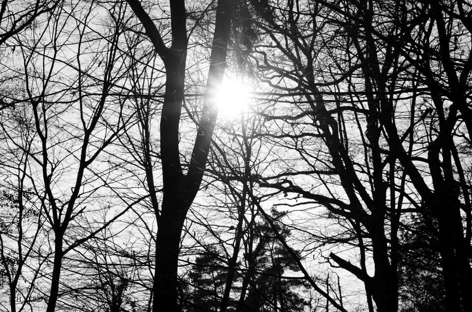 Sonne zwischen den Bäumen