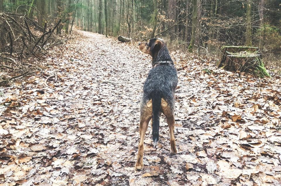 #unsercharly im Wald