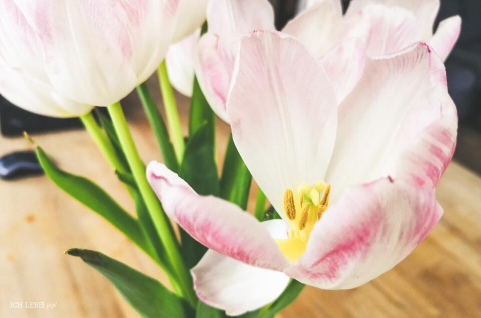 verblühende Tulpen