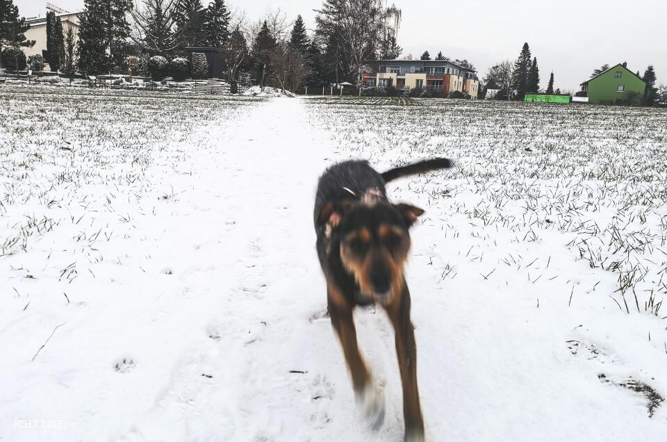 Charly auf dem Feld