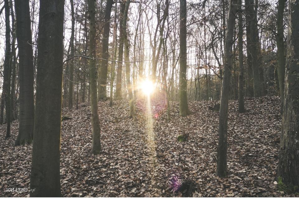 Sonne blitzt durch die Bäume