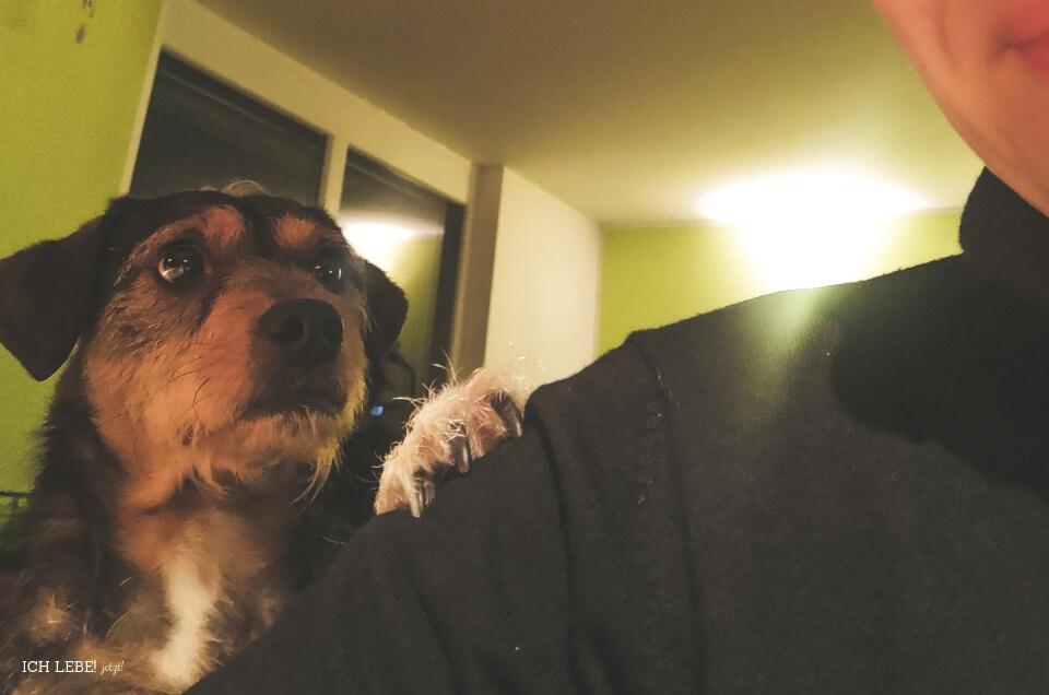 Charly legt Pfote auf die Schulter