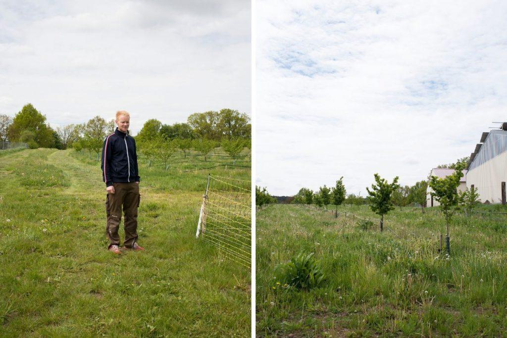 Der Jungunternehmer Martin Stiegler auf seiner Haselnußplantage.