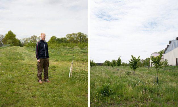 Nachhaltigkeit in Franken: Die Haselnuß
