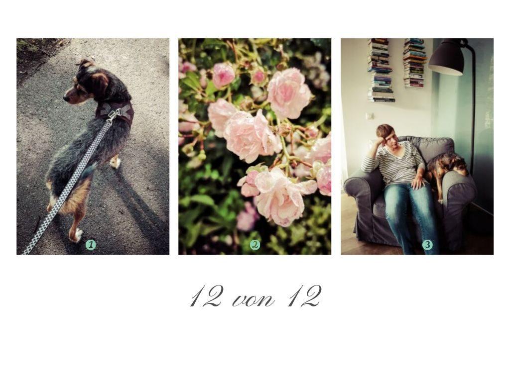Die ersten drei Bilder des Tages