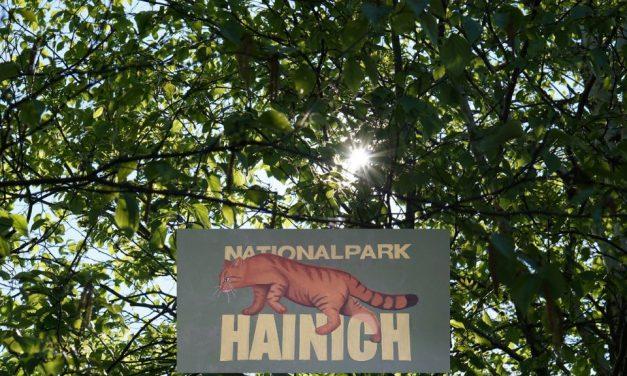 Pressereise: Nationalpark Hainich