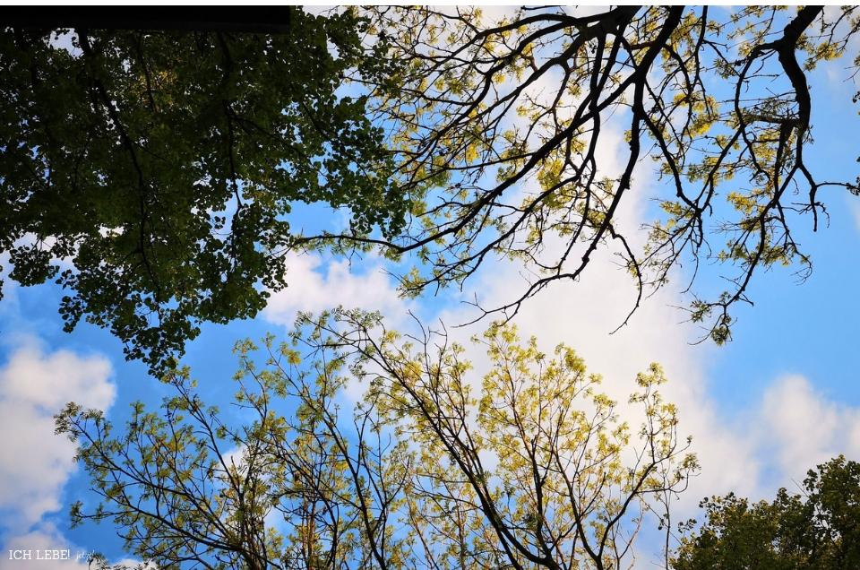 Der Blick in den Himmel