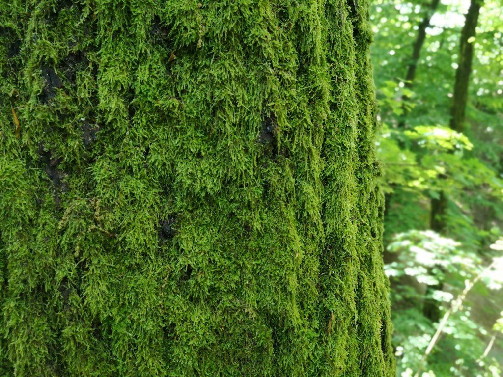 Raus in den Wald