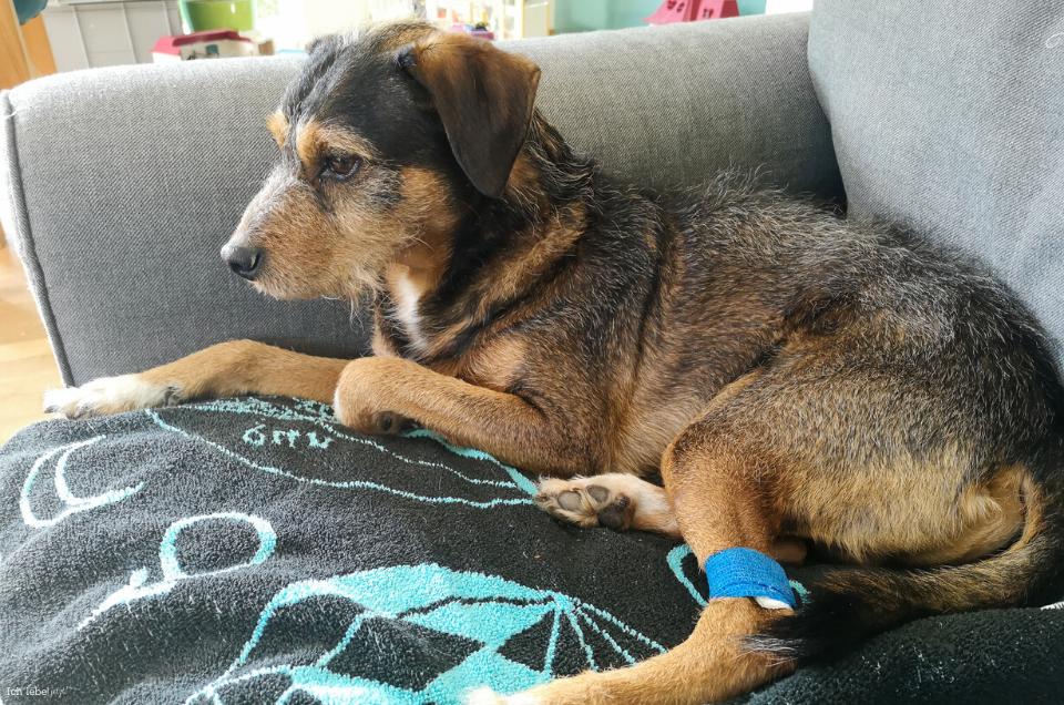 Charly auf dem Sofa