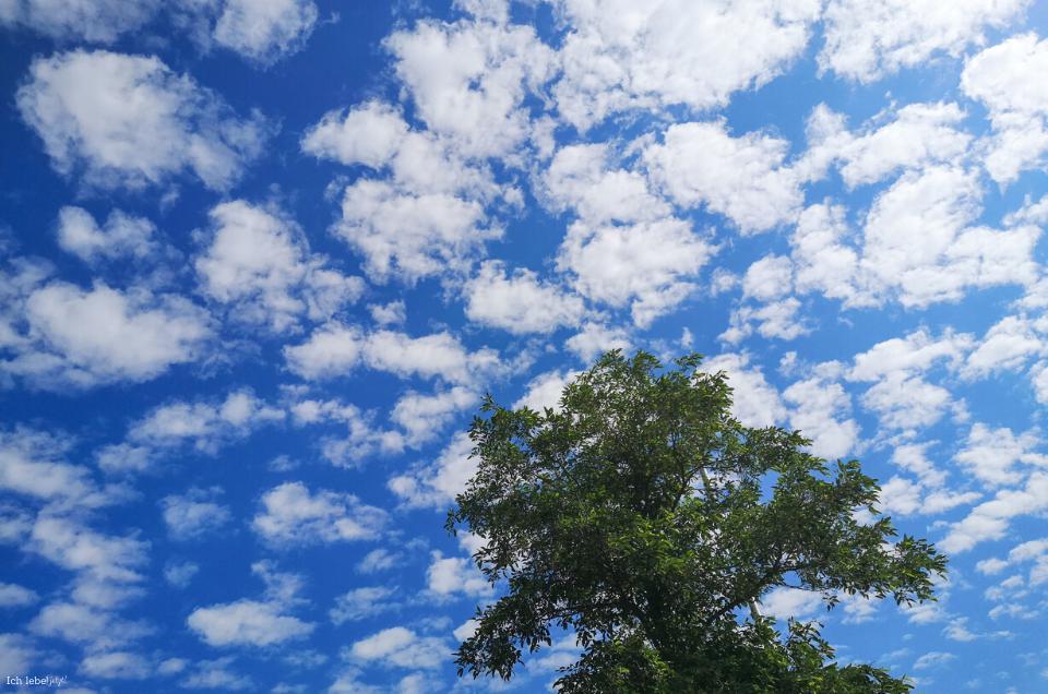 Baum an Wolken