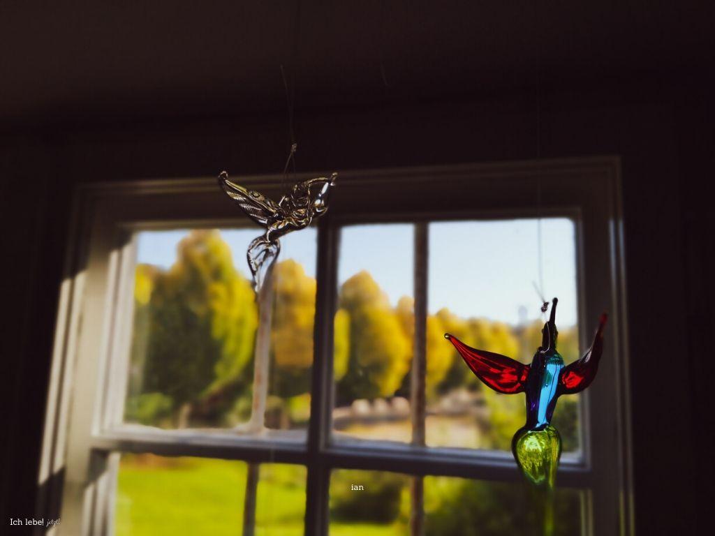 Glasvögel im Fenster