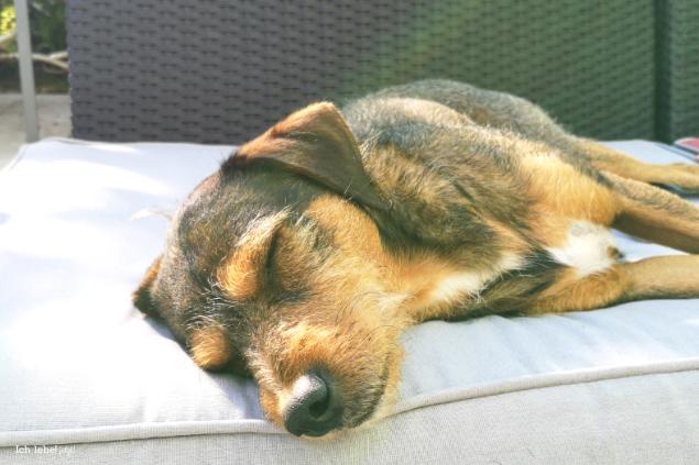 Charly ist müde