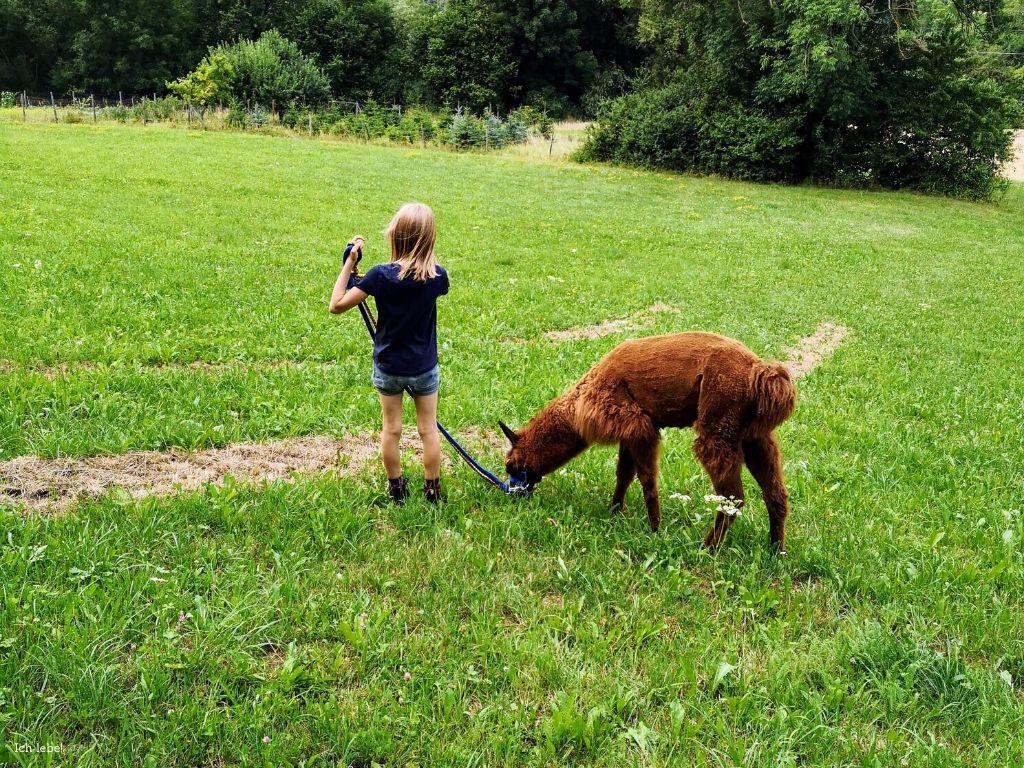 Die Jüngste und ein Lama