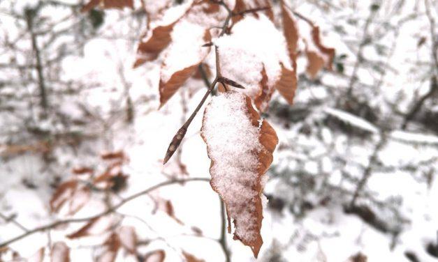 Sonntag im Schnee – Gassirunde im Lockdown