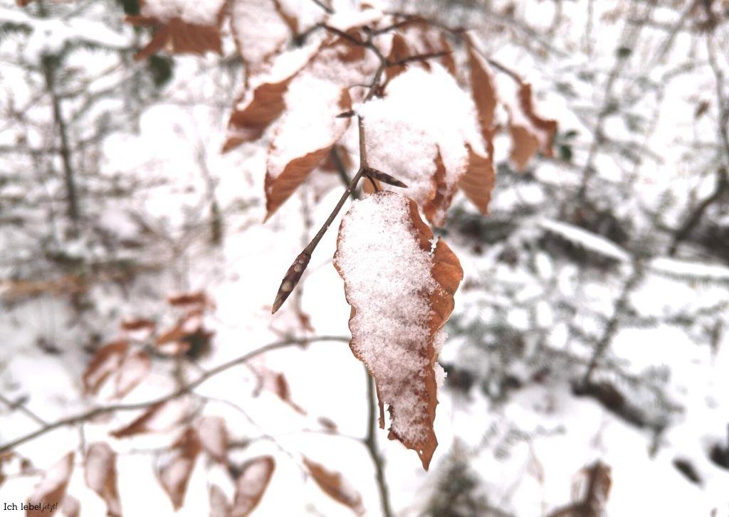 Verwelktes Blatt unter Schnee