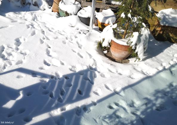 Die Katze macht Spuren im Schnee