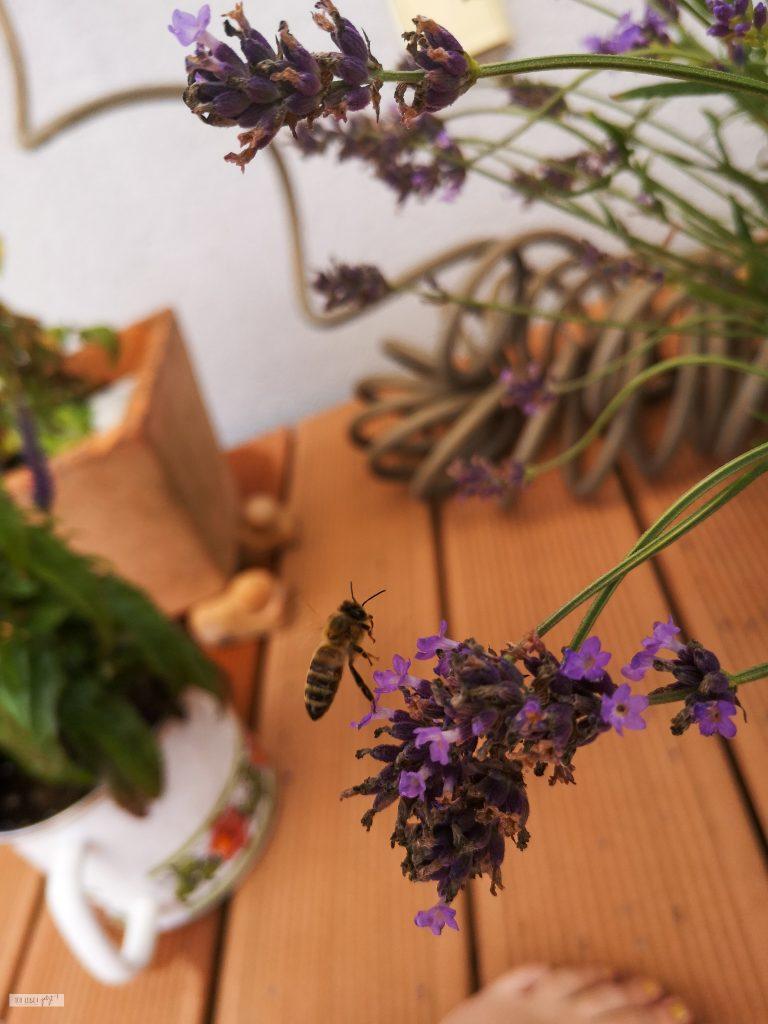 Hummel auf Lavendelblüte